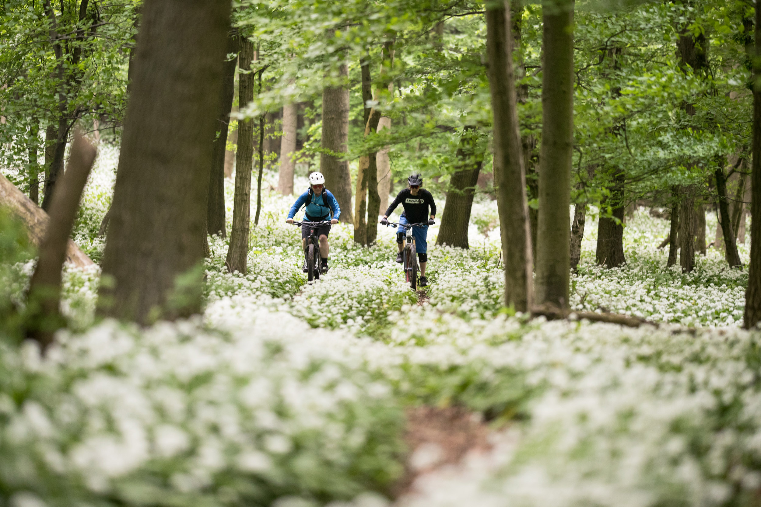 Update Shared-Trails und Co - Wienerwald Trails