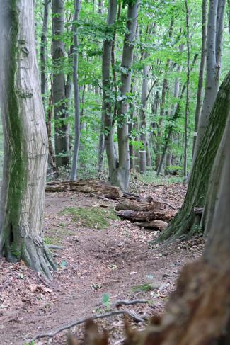 Enduro: Hier zeichnet der Wald horizontal wie vertikal die Line.
