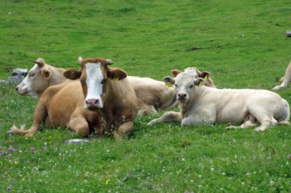 Und Blumen, und Kühe!