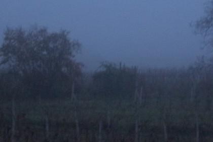 Das Worst-Case-Szenario: Nebel, Unscharf, verwackelt und unterbelichtet -ein Fall für den Müll