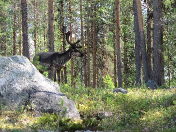 die Wälder dichter.